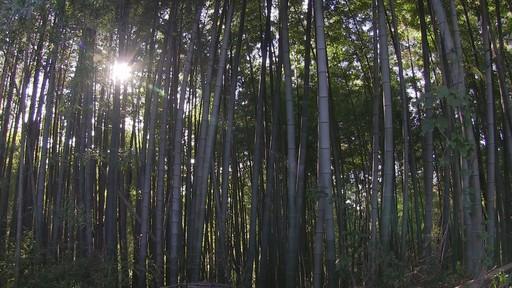 HFG10sample_bamboo.jpg