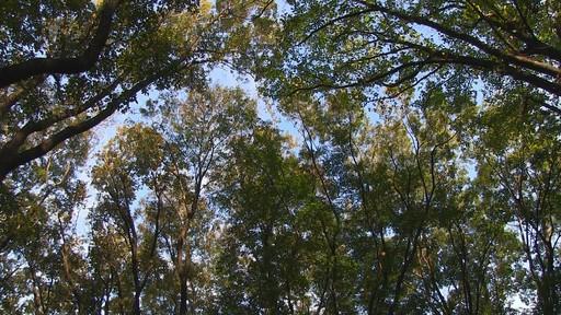 HFG10sample_forest.jpg